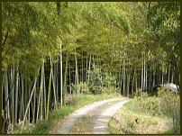 京都市内の山中